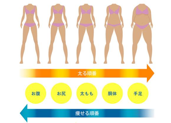 痩せる順番を意識した設計